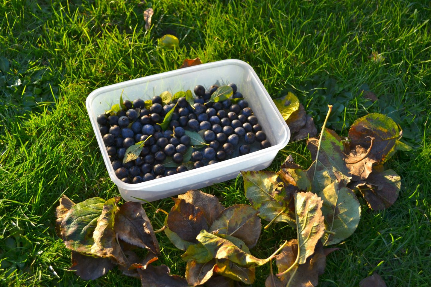 Autumnal Walks & Sloe Gin Recipe