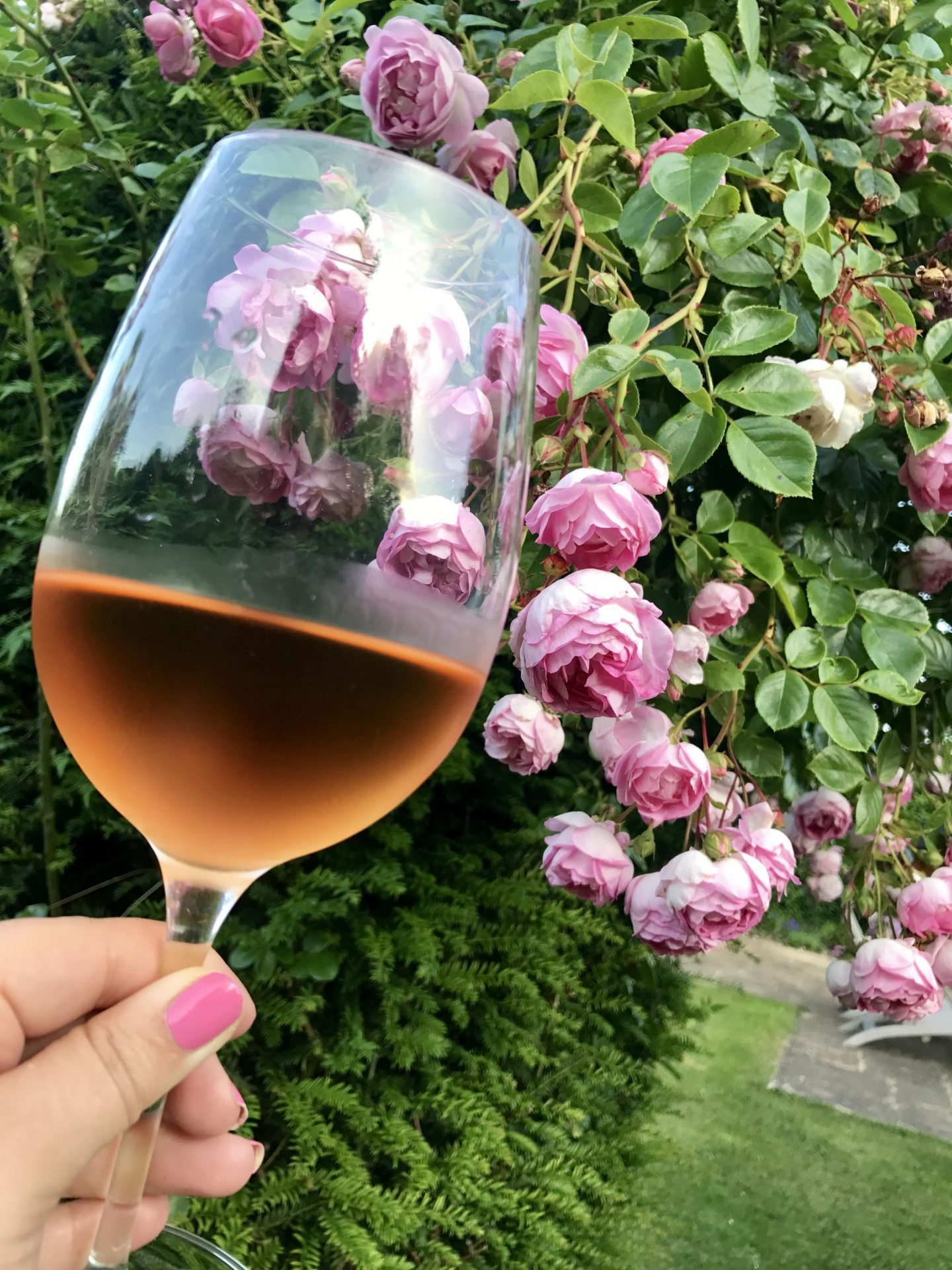 La Vie En Rosé…A Little June Update